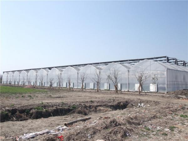 Quality Vegetable Greenhouse for sale