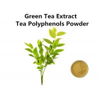 China High Standard Green Tea Extract 1000mg, Pure Natural Green Tea Extract Fat Loss For Food And Drink wholesale