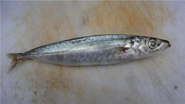 arowana fish price in india Continue my little gem