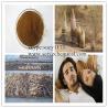 China 100% Nature plant extract Desertliving Cistanche P.E. / sucy@chembj.com wholesale