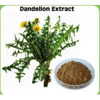 China Dandelion Root Extract on sale
