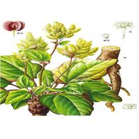 Natural Rhubarb Extract Emodin CAS No.518-82-1 and Rhein CAS No.478-43-3 for sale