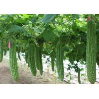 China Natural Bitter Melon Extract Glycosides Natural Health Supplements Pharmaceutical Grade for sale