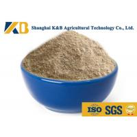 China Natural Plant Based Protein Powder / Rice Protein Nutrition No Agglomeration on sale