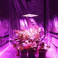 China Hydroponic LED Plant Grow Light , 300W Full Spectrum Lamp for Greenhouse wholesale