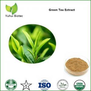 China green tea extract bulk,pure green tea extract,green tea p.e.,green tea leaf extract on sale