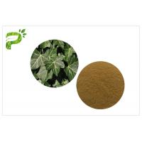 China Ivy Leaf Herbal Plant Extract Hedera Helix Hederacoside Promote Blood Circulation For Dietary Supplement wholesale