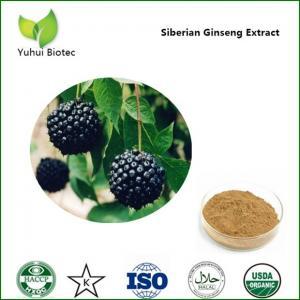 China Siberian Ginseng Extract,eleutheroside b,siberian ginseng root extract,eleutheroside wholesale