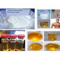 China Testosterone Steroid Test Enanthate Powder CAS 315-37-7 for Muscle Gain wholesale