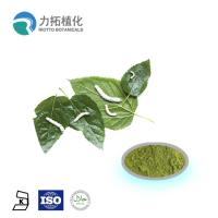 China Mulberry  leaf extract powder / DNJ Weight loss activities against a-glycosidase wholesale