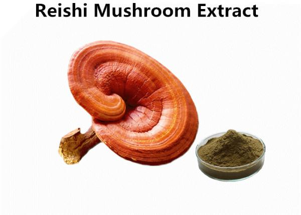 Quality Red Reishi Mushroom Polysaccharides Extract Powder Supports Immune Health Function for sale