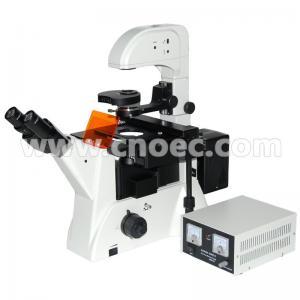 China Laboratory Biology Epi-Fluorescence Microscope 100X - 400X A16.0206 on sale