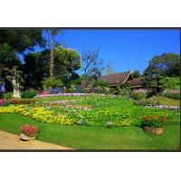 China Green Landscaping Artificial Grass wholesale