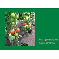 China 8mm Colorful Spiral Plant Support , Durable Garden Spiral Tomato Stakes wholesale