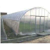 China Single span greenhouse wholesale