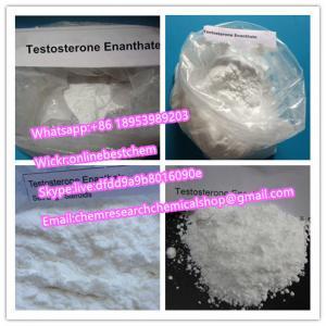 China Body Building Anabolic Steroid Powder , Testosterone Enanthate Powder CAS 315-37-7 wholesale