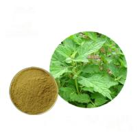 China Plant Pure Natural Isodon Rubescens Extract 0.5% - 98% Oridonin Powder wholesale
