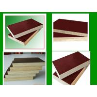 China 1220*2440*18mm poplar plywood & hardwood plywood & combi plywood wholesale