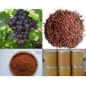 China Grape Seed P.E. wholesale