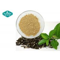 China 98% Polyphenols Natural Botanical Extracts / Dehydrated Green Tea Extract With Antioxidants wholesale