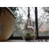 China Mini-serre accrochante en verre claire/corrosion accrochante de supports en verre d'usine anti wholesale