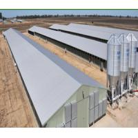 Steel Structure Chicken Farm-ISO9001: 2008 (BYCH-007) Poultry House&Shed