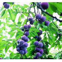 Dietary Supplement Ingredient 25% Blueberry Extract Anthocyanidins 100% Natural for sale