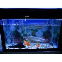 China 300 watt aquarium led lighting on sale