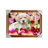 China Подгонянная рамка ПС изображения запаса 3Д обслуживания печатания изображений 3Д ЛЮБИМЦА линзовидная wholesale