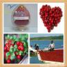 China Cranberry Extract Powder Proanthocyanidins wholesale