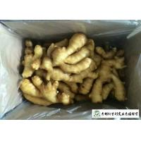 China Fleshy Organic Fresh Ginger , Juicy Old Ginger Common Cultivation Type wholesale