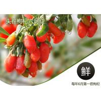 China Weight Loss Herbal Dried Fruit Pure Goji Berry Wolfberry / Chinese Wolfberr wholesale