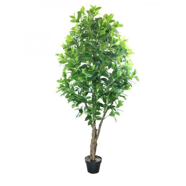 招财树70cm 广州市白云区海虹仿真植物厂 高清图片