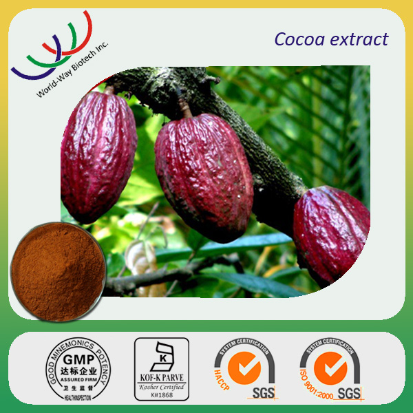 Cacao Dried Seed Images