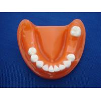 China Import Data and Price of plaster dental model - plaster dental model HS Code on sale