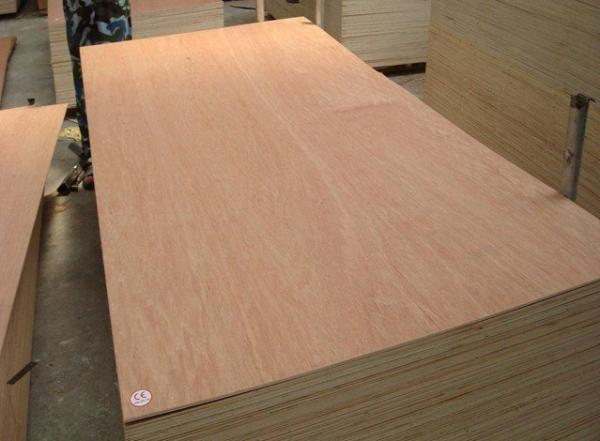 Quality Bintangor plywood for Commercial Use for sale