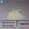 China 360-70-3 стероиды Деканоате ДЭКА Дураболин Нандролоне для массивного увеличения КАС 360-70-3 мышцы wholesale