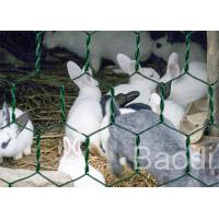China Plastic Coated Chicken Wire Mesh Galvanized Iron Wire As Fencing Mesh on sale