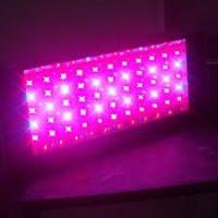 China LED Grow Light 300W Grow Light on sale