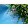 China HDPE Plastic Cosmetic Bottles Transparent Round Fragrance Bottle wholesale