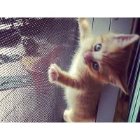 China Anti-scratch of cats waterproof durable Pets mesh for screen window and door on sale