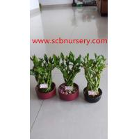 Buy cheap Lucky bamboo cage from wholesalers