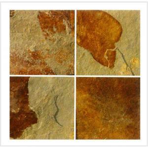China Yellow slate slab wholesale