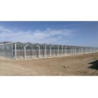 China Anti Wind Commercial Glass Greenhouse High Light Transmission For Vegetable Cultivation wholesale