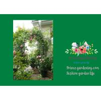 China Steel Garden Plant Trellis / Garden Arch Trellis Support 140 X 240cm wholesale
