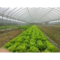 China Cheap Greenhouse wholesale