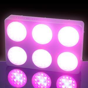 China cheap 3 watt LED grow light gardening wholesale