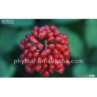 China Hot sell 100% Natural herbal extract Panax Ginseng Root Extract/ Ginseng extract on sale