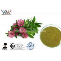 China Food Grade Natural Botanical Extracts , Red Clover Leaf Extract Relieve Menopausal Symtoms wholesale