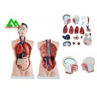 China Medical Dual Sex Human Torso Anatomy Model With Head Clear Structure wholesale